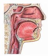images рак носоглотки