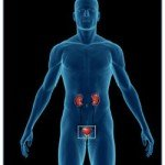 Urinary-System