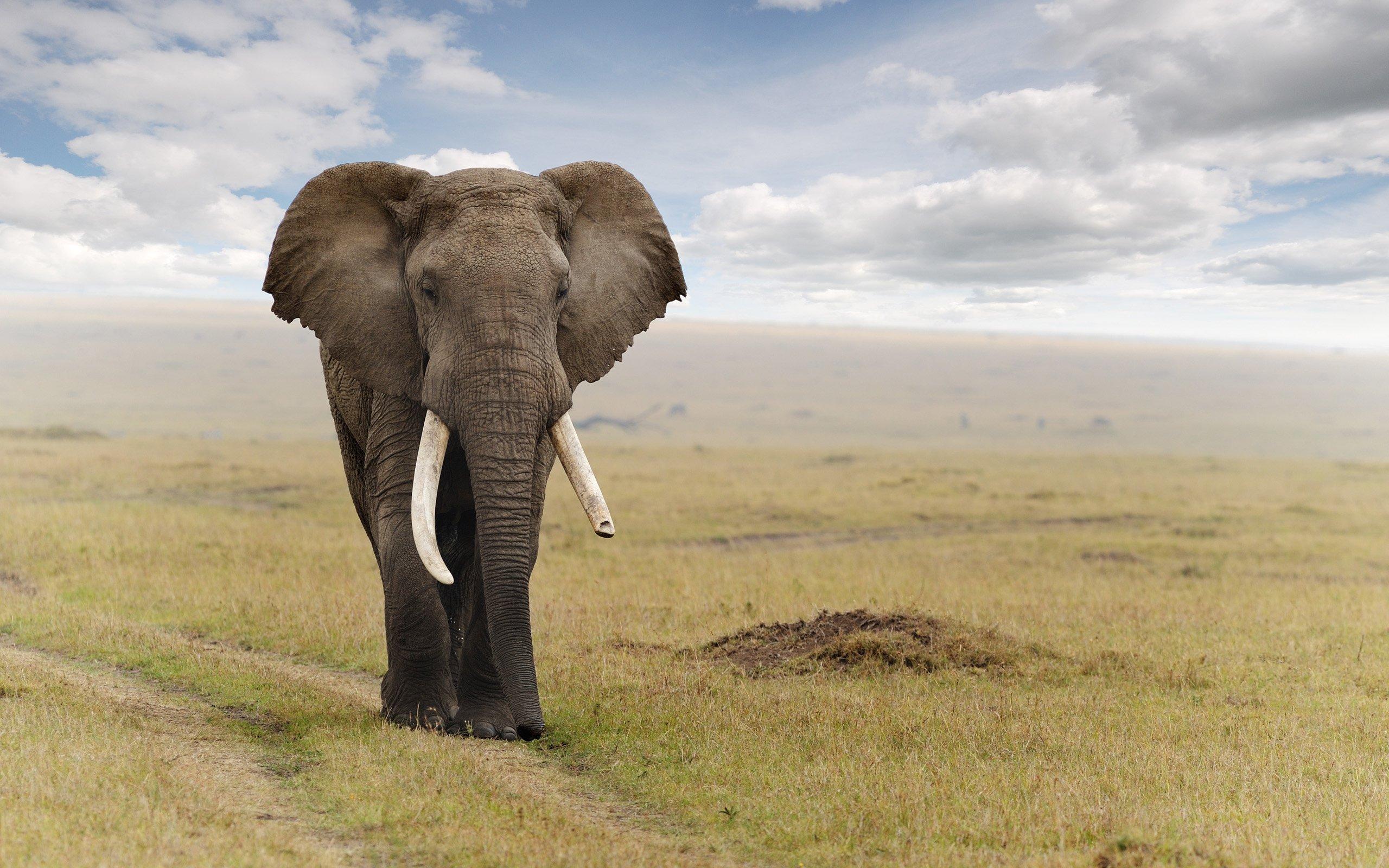 слоны спасут от рака